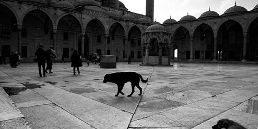 ISTANBUL  04/2014 - Orhan Pamuk, Ara Guller, John Ruskin.