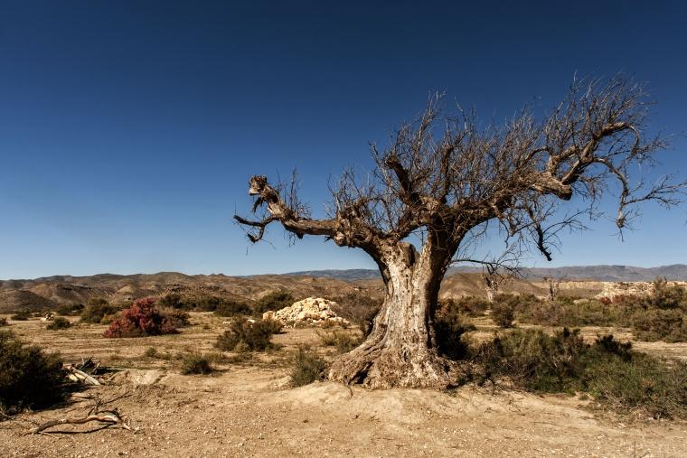 Spagna, DESERTO DI TABERNAS: Perdersi non è mai stato così bello
