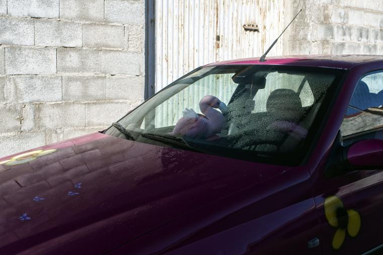 Spagna, LIBRILLA: Voglia di guidare