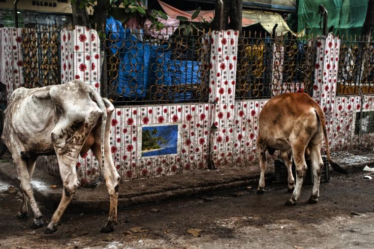 India, CALCUTTA: E come al solito ho fatto un bel capitombolo