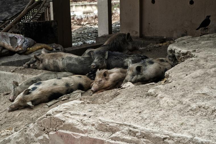 India, PATNA: Come Bear Grylls a caccia di proteine