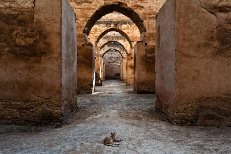 MAROCCO: Il Marocco è un paese per gatti (articolo contenente gatti e informazioni utili per viaggiare in Marocco)