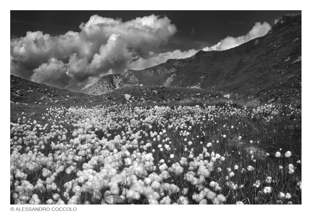 Wolayer Alpe (Rauchofel)