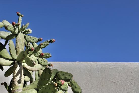 © Gina De Bellis - ginadebellis.com